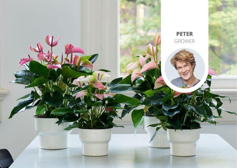 Les effets positifs des plantes