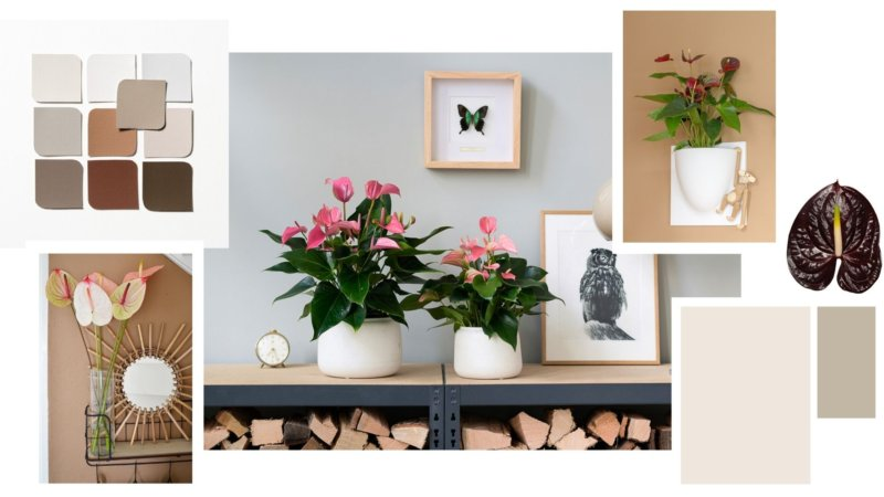 Décorez votre intérieur avec Brave Ground, la couleur tendance 2021 de Flexa