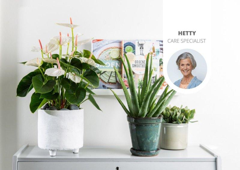 La façon la plus simple de vérifier si les plantes ont besoin d'eau