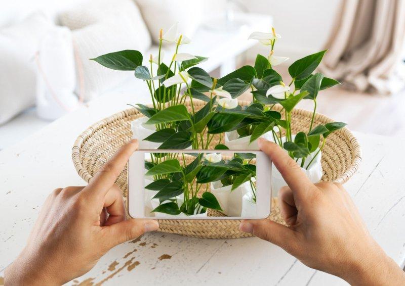 6 applications pour plantes aider à identifier et à prendre soin