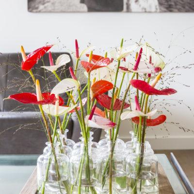 Verschillende soorten anthurium: de lakanthurium en de flamingoplant