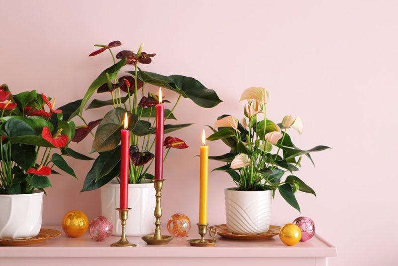Kerst tip: Zet een Anthuriumplant op een dressoir en combineer met kaarsen en kerstballen in dezelfde kleur