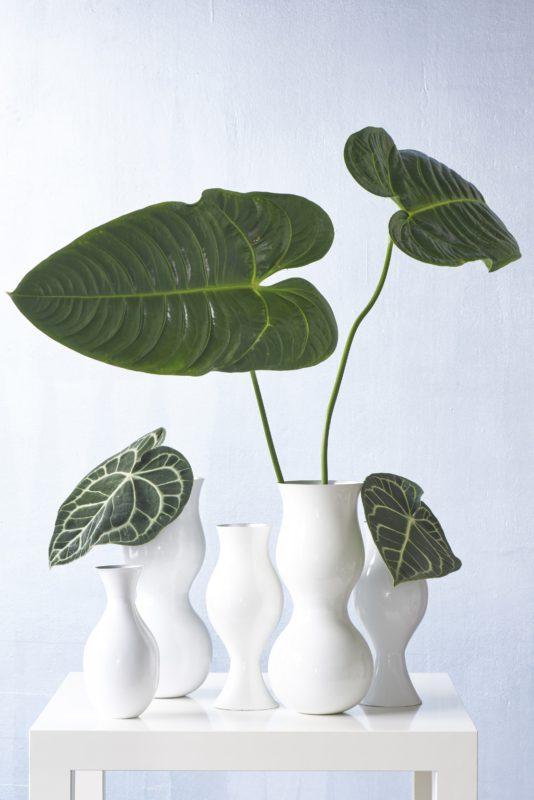 Styling tip hoe decoreer je met anthurium potplanten