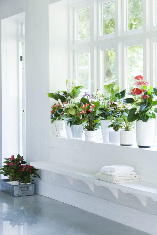 Zo geef jij je planten een lang en gelukkig leven