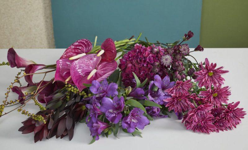 Anthurium bloemen in de Pantone kleur van 2018: Ultra Violet