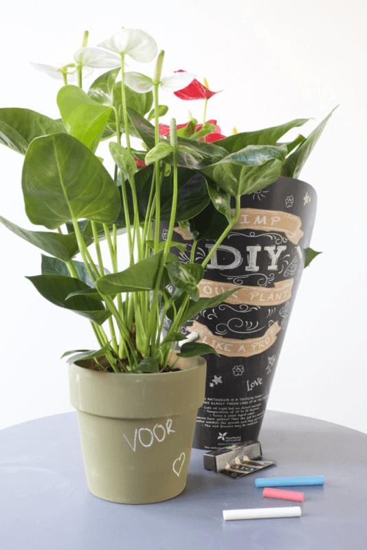 4 redenen waarom de anthurium de ultieme Valentijns bloem en -plant is