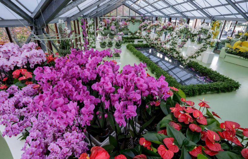 Romanticism in Keukenhof: the world's largest spring-flowering park