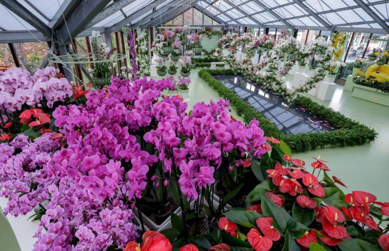 Romanticism in Keukenhof: the world's largest spring-flowering park