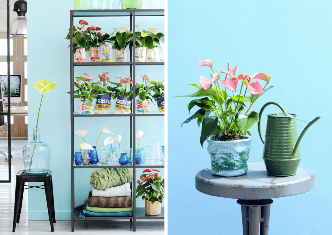 Give your home a spring update