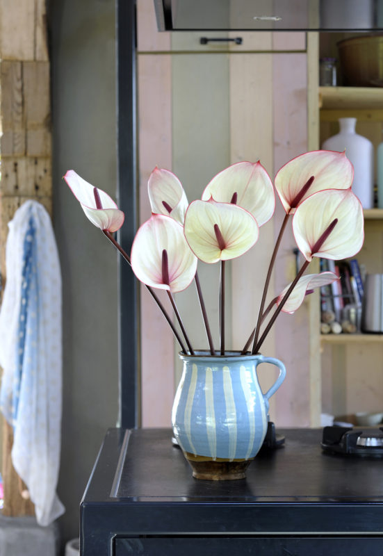 Tulpvormige anthurium
