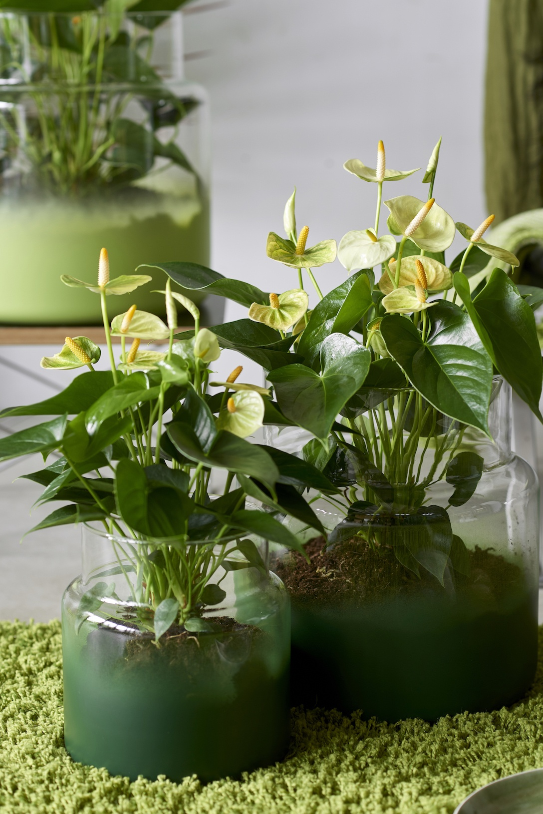 voorjaar-in-huis-planten-anthurium-plant-urban-jungle-groen-trend ...