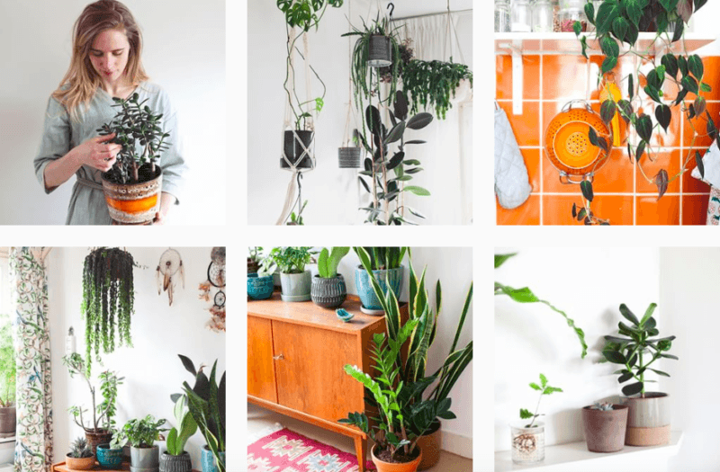 Blogs over planten: Mama Botanica