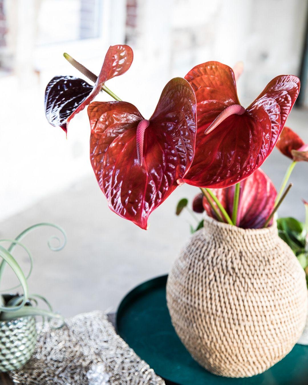 4 tips om mooie & originele foto's van bloemen te maken