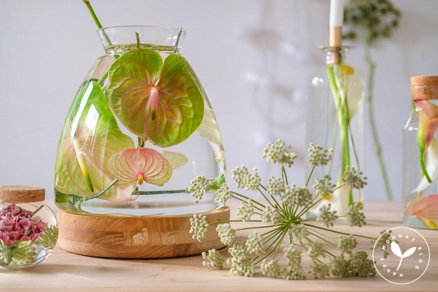 Der neueste grüne Trend: Hydroponik mit Anthurien