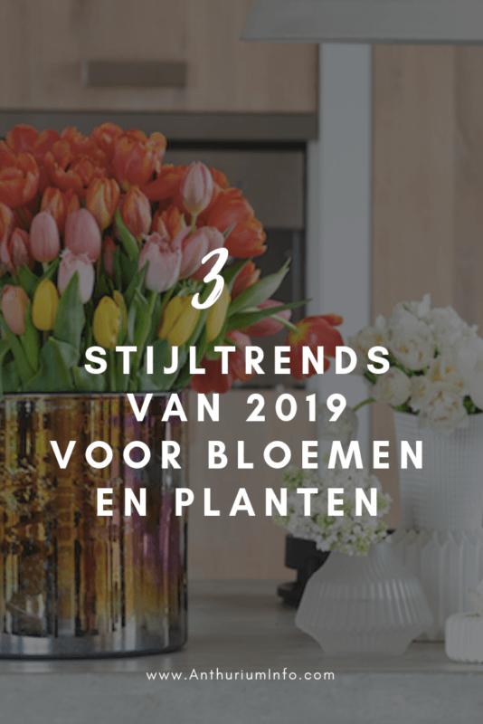 De 3 stijltrends van 2019 voor de bloemen- en plantensector