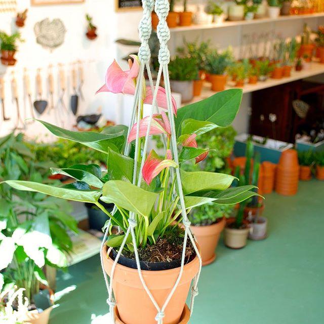 planten mooi neer te zetten