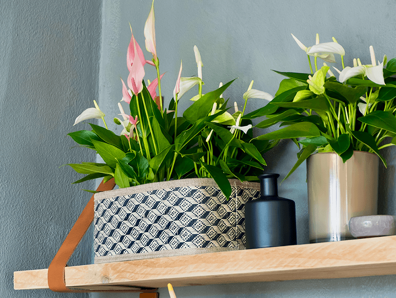 6 beautiful ways to display your plants
