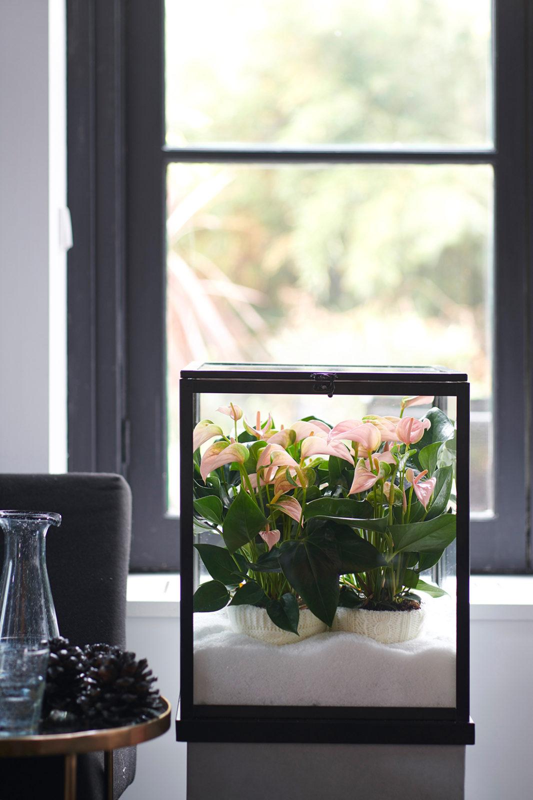 6 manieren om je planten mooi neer te zetten in je interieur
