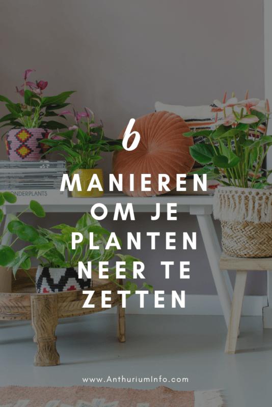 6 manieren om je planten mooi neer te zetten