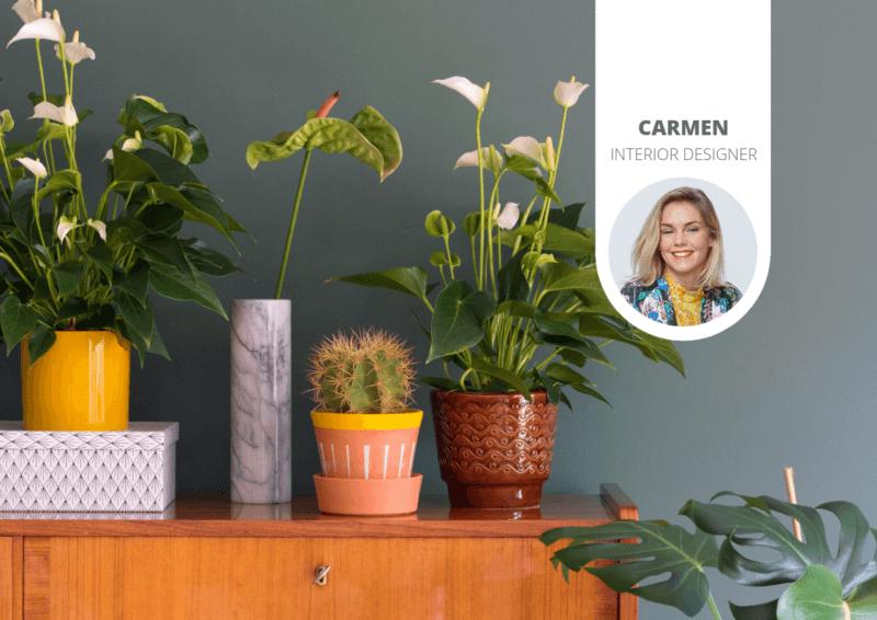 6 bijzondere plantenpotten voor je anthurium potplant