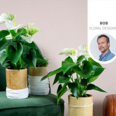 Waar kun je een anthurium plant online bestellen?