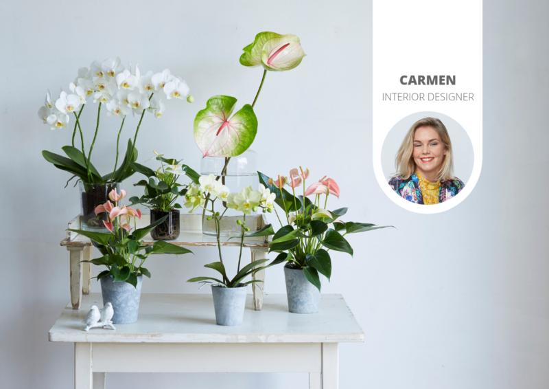 Zijn planten goed voor de slaapkamer?