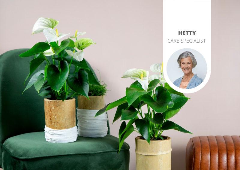 Waar groeien planten het best?