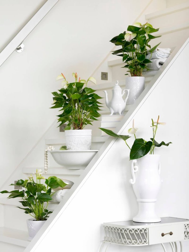 Decorate your stairwell with Anthurium plants: 3 tips