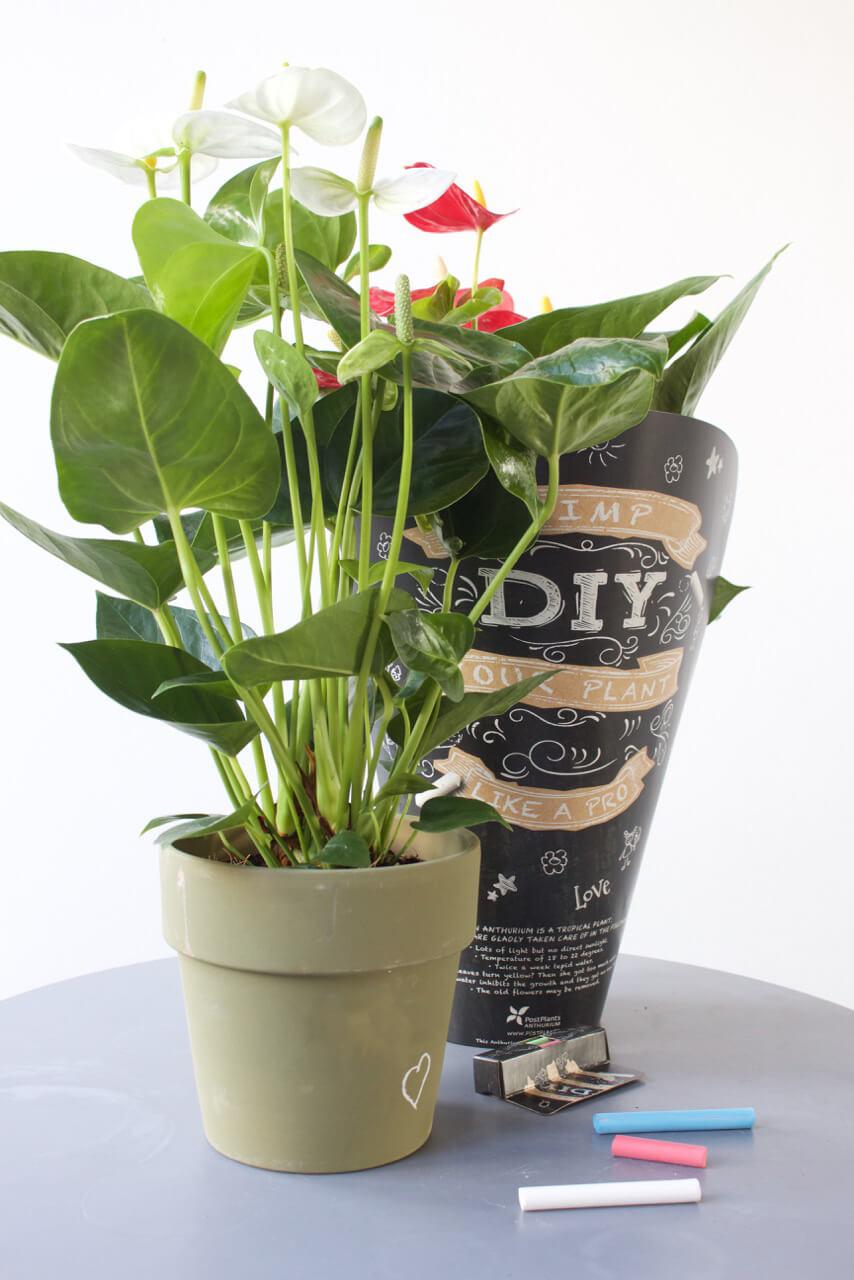 4 redenen waarom de anthurium de ultieme Valentijnsbloem en -plant is