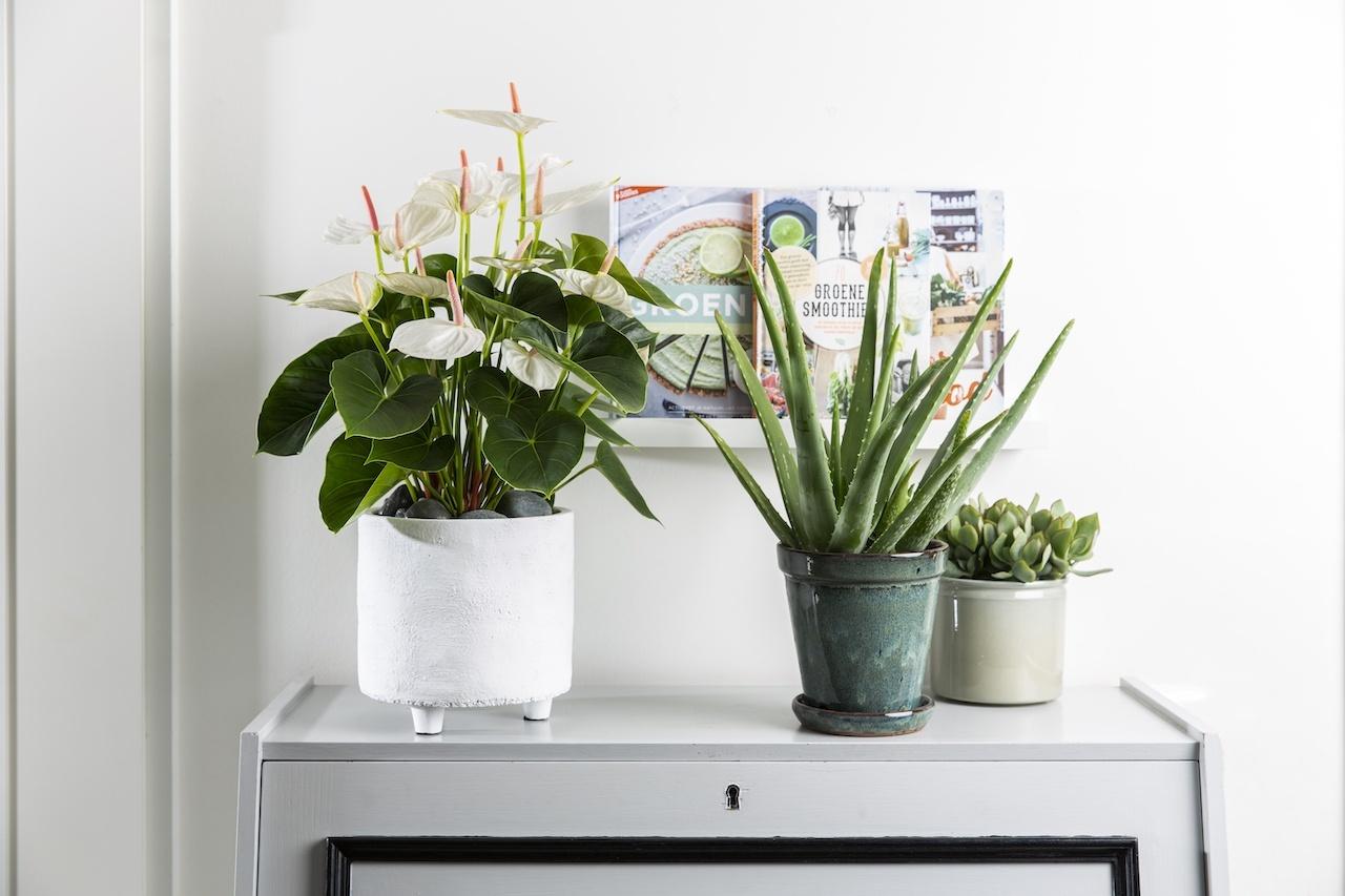 Waarom de plastic binnenpot van een kamerplant zo belangrijk is
