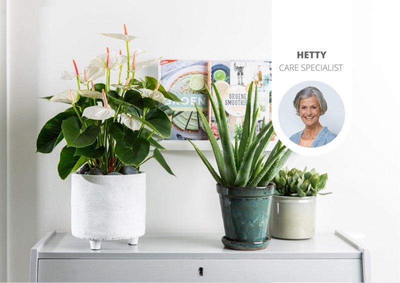 Verhoog de luchtvochtigheid in huis voor jou en je planten