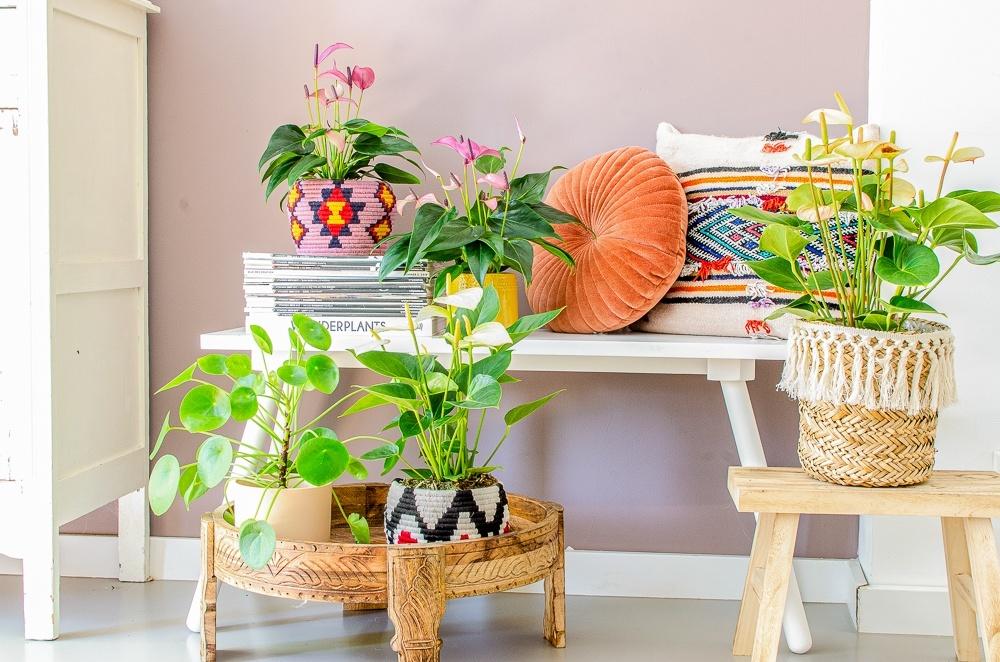 Zo haal je het reisgevoel in huis met planten