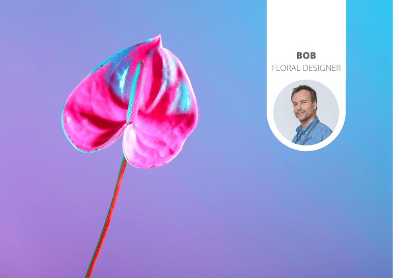 De nieuwste bloementrend: geverfde anthuriums