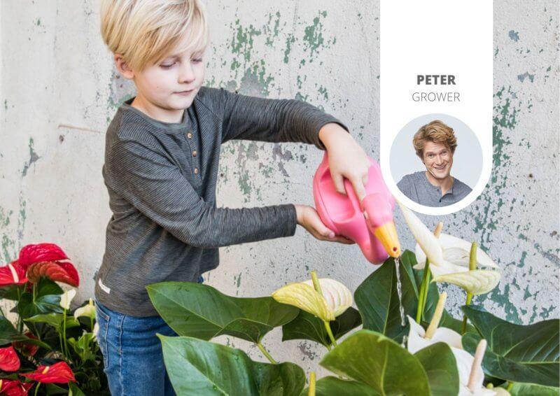 Niet geweldig met kamerplanten? 5 redenen om anthuriums te kopen