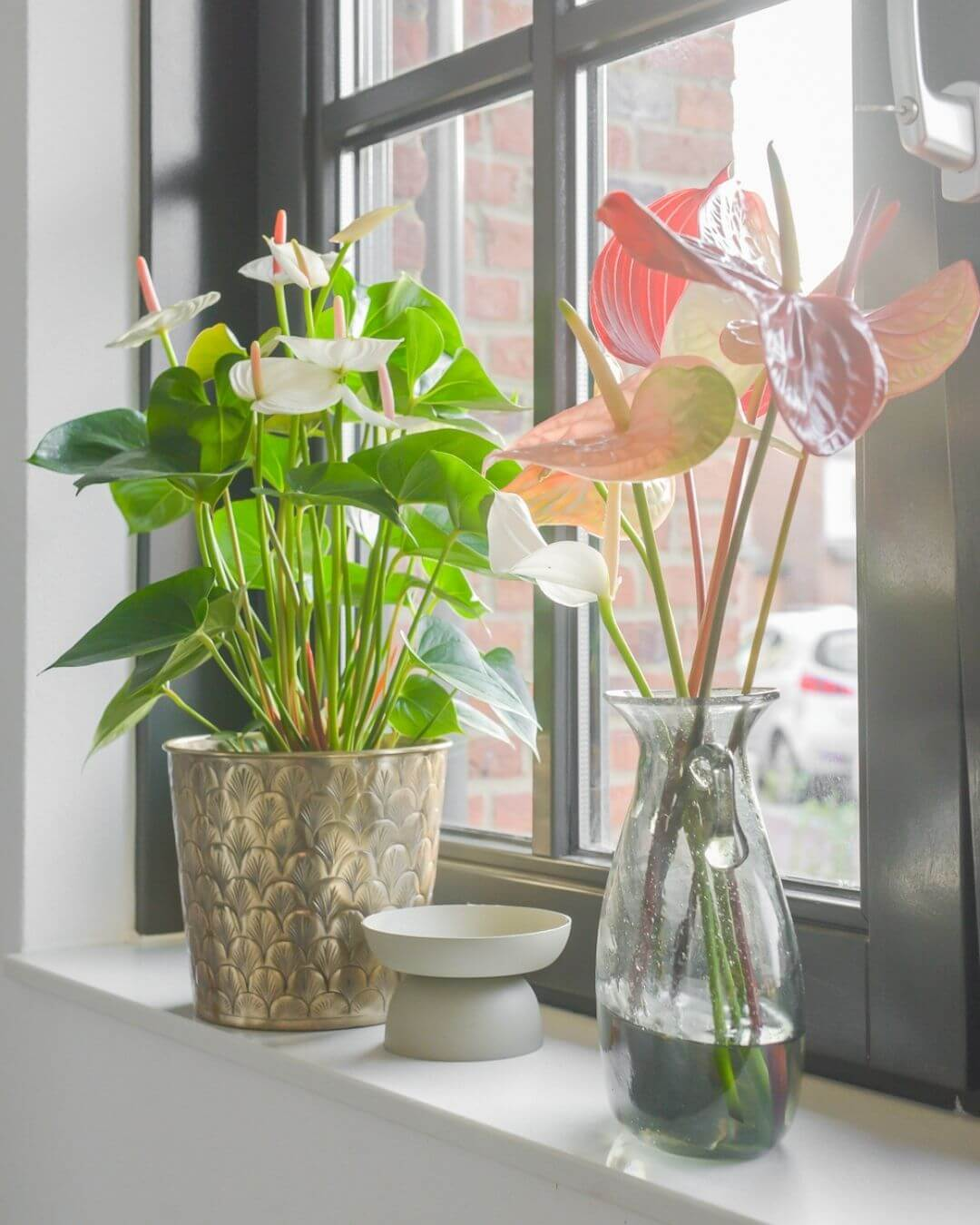Zo gebruikt Binti Home anthuriums in haar interieur