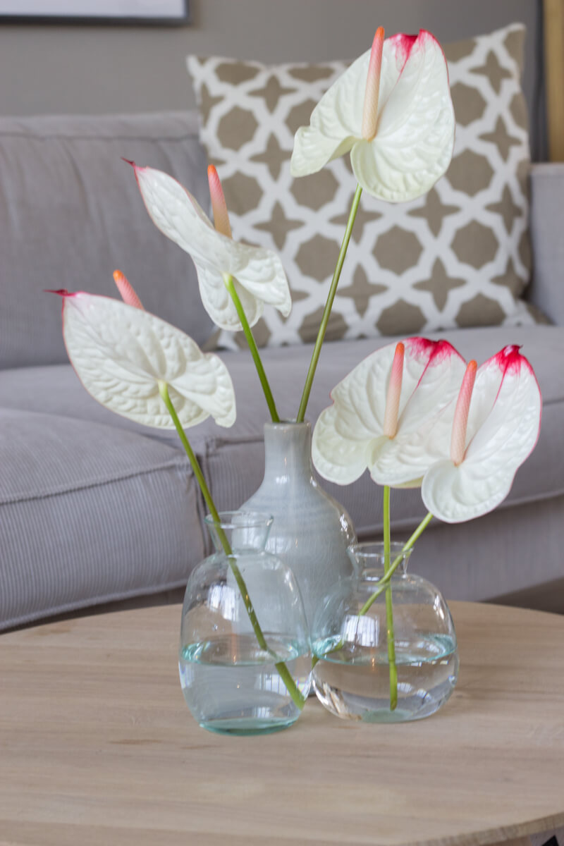 10x anthuriums in een bohemian interieur