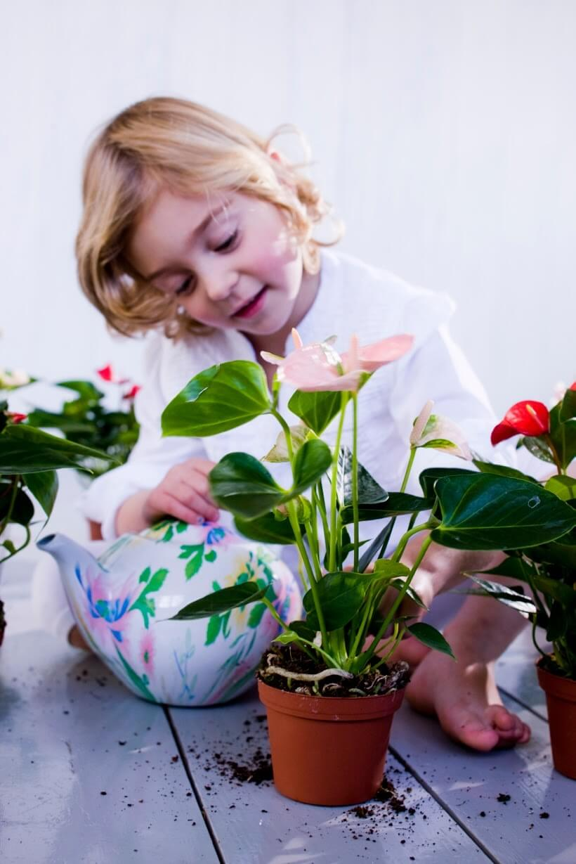 Dit zijn de belangrijkste verzorgingstips voor bloemen en planten