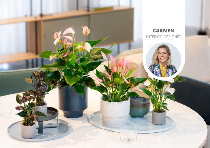 7 manieren om je planten mooi neer te zetten