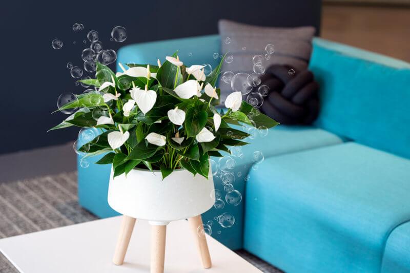 Zo fleur je je thuiswerkplek op met kleurrijke anthuriums