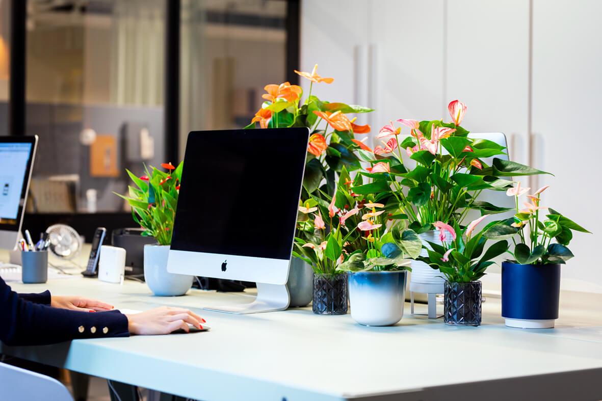 Fleur je thuiswerkplek op met een Anthurium of Bromelia en krijg een Elho pot cadeau